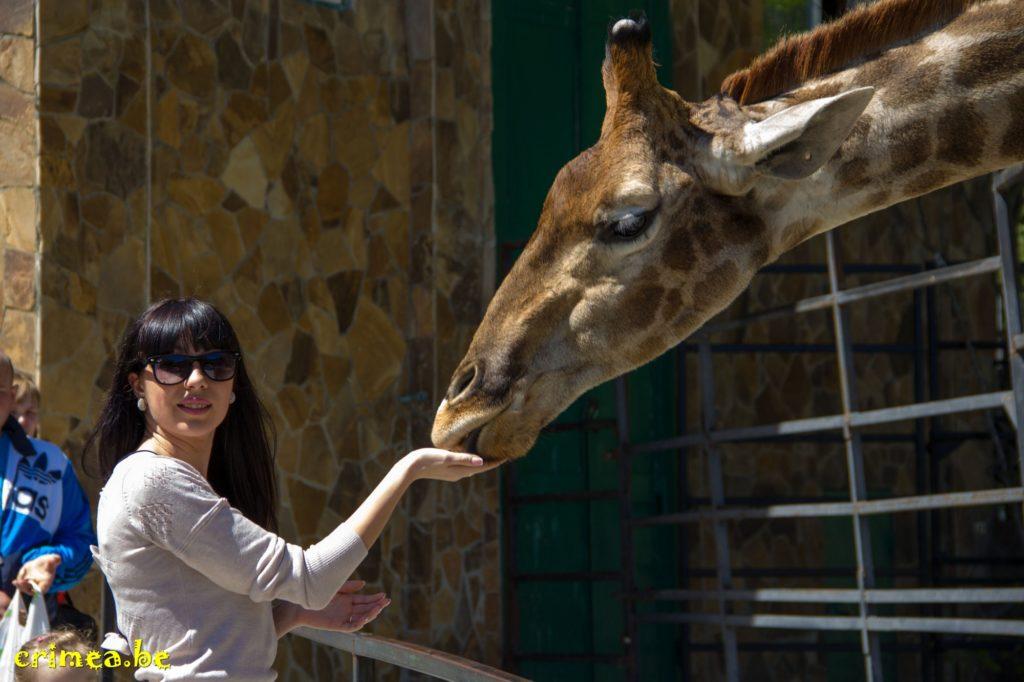 Зоопарк в Ялте жираф