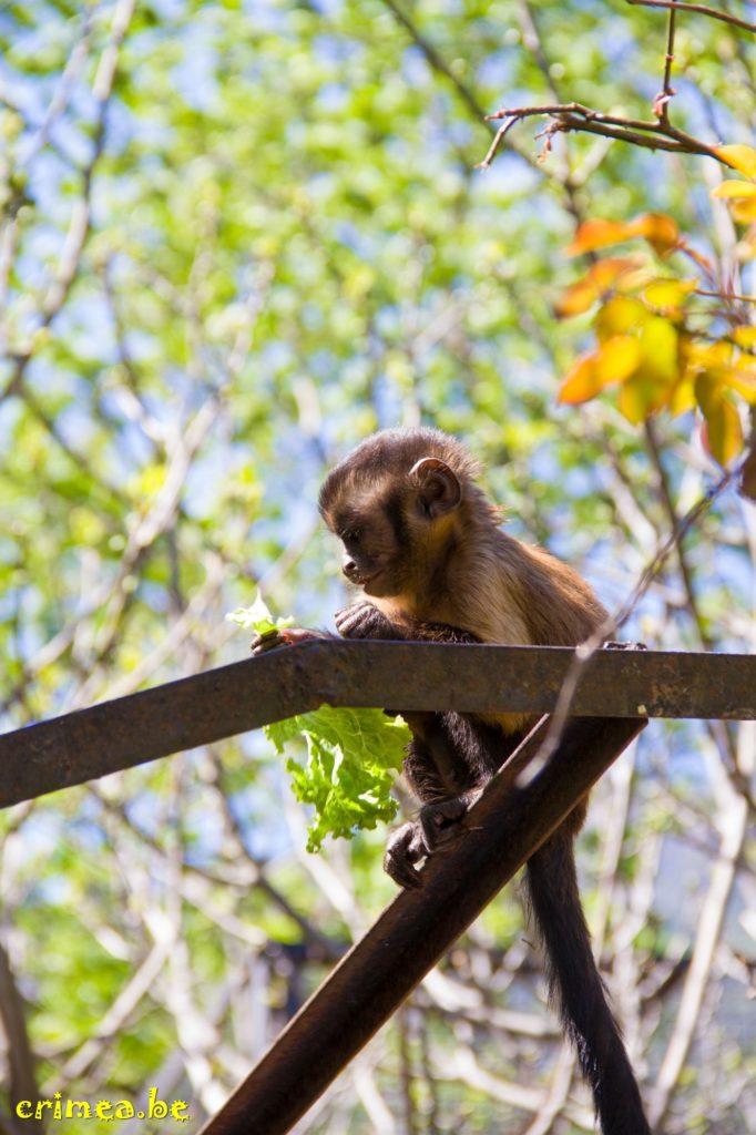 Зоопарк в Ялте, обезьянка