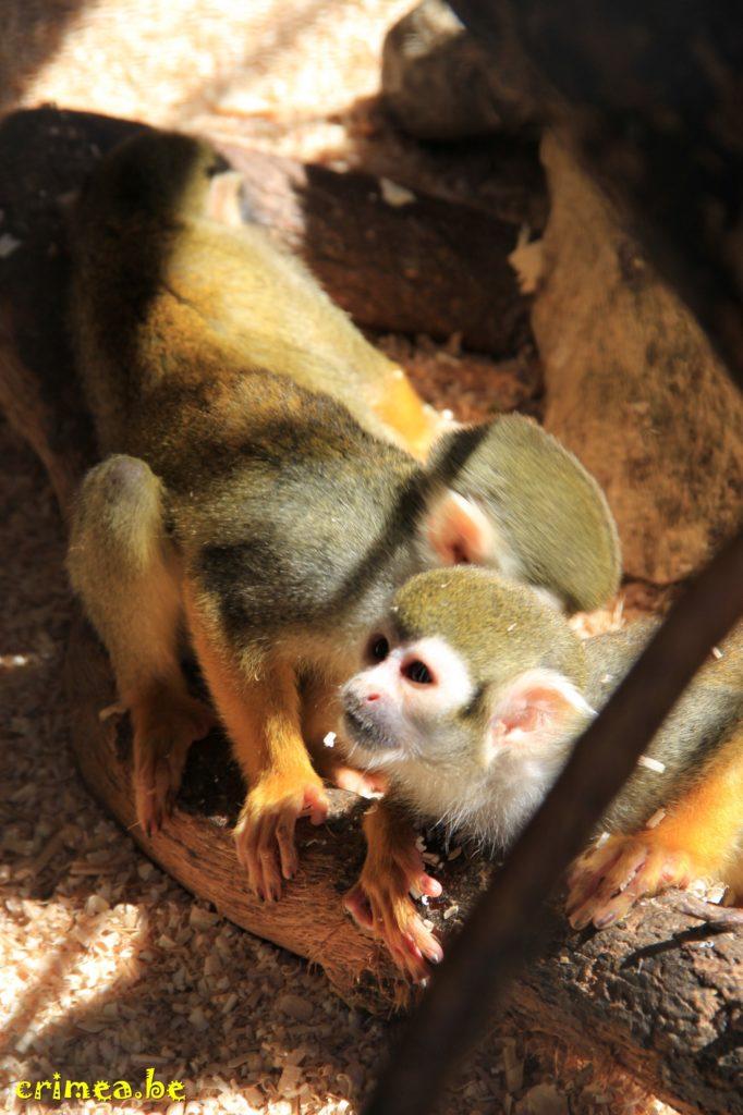 Зоопарк в Ялте, обезьянки)