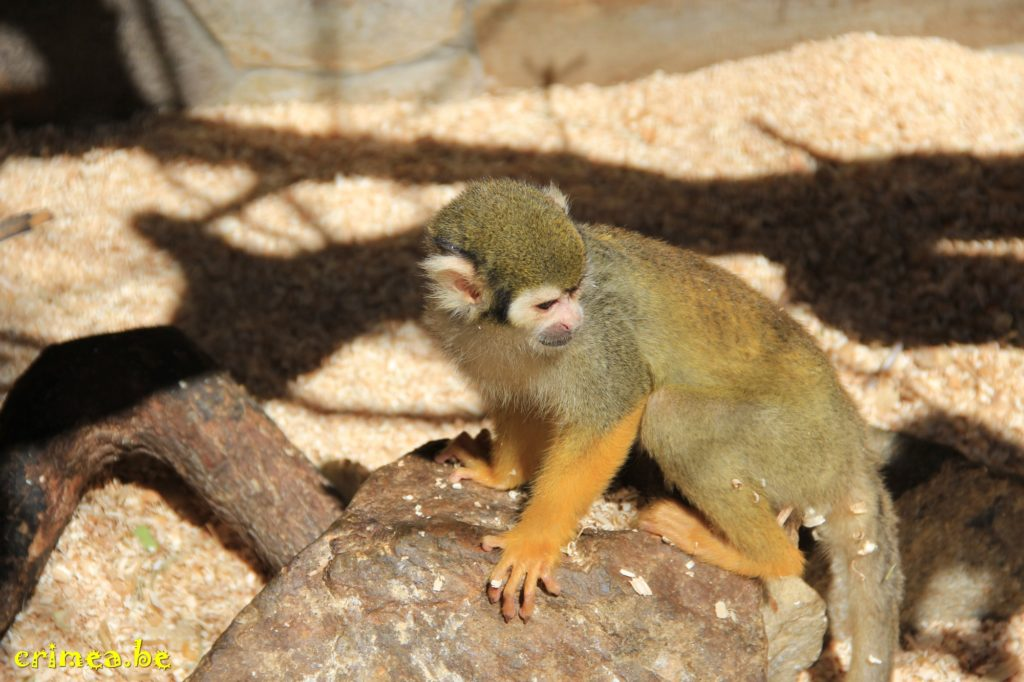 Зоопарк в Ялте, обезьянка)
