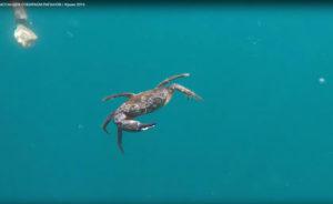 Крабы в Ялте Черное море